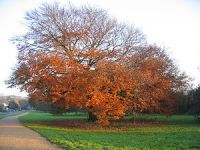 300px-Autumn_on_the_Millennium_Way_-_geograph_org_uk_-_98925